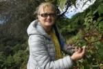 Очень вкусная ежевика на склоне вулкана Бару