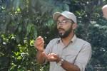 Мякоть кофейных ягод используют как удобрение