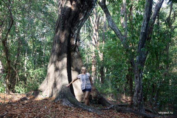 Остров Контадора сохранил тропические джунгли, некоторым из деревьев не одна сотня лет