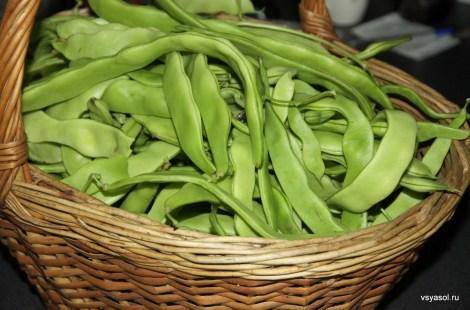 Заготавливаем зеленую фасоль