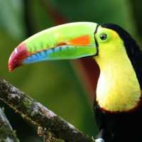 Most parrots live in tropical and subtropical. Birds Of The Rainforests