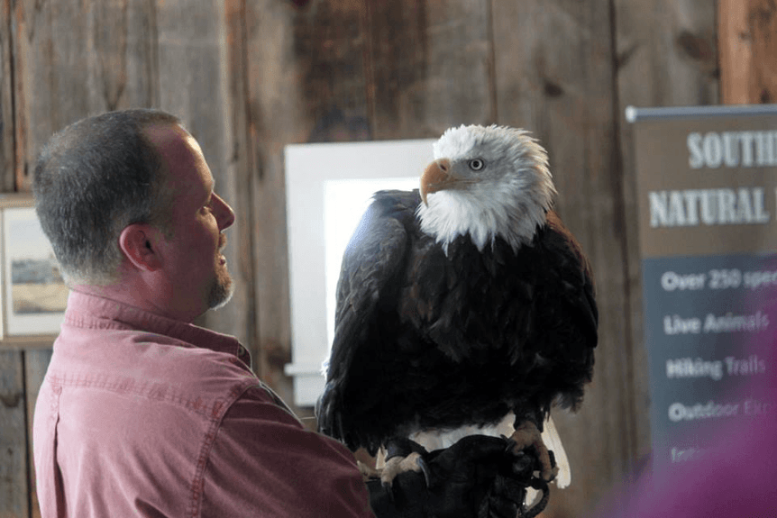 Image of an eagle and handler