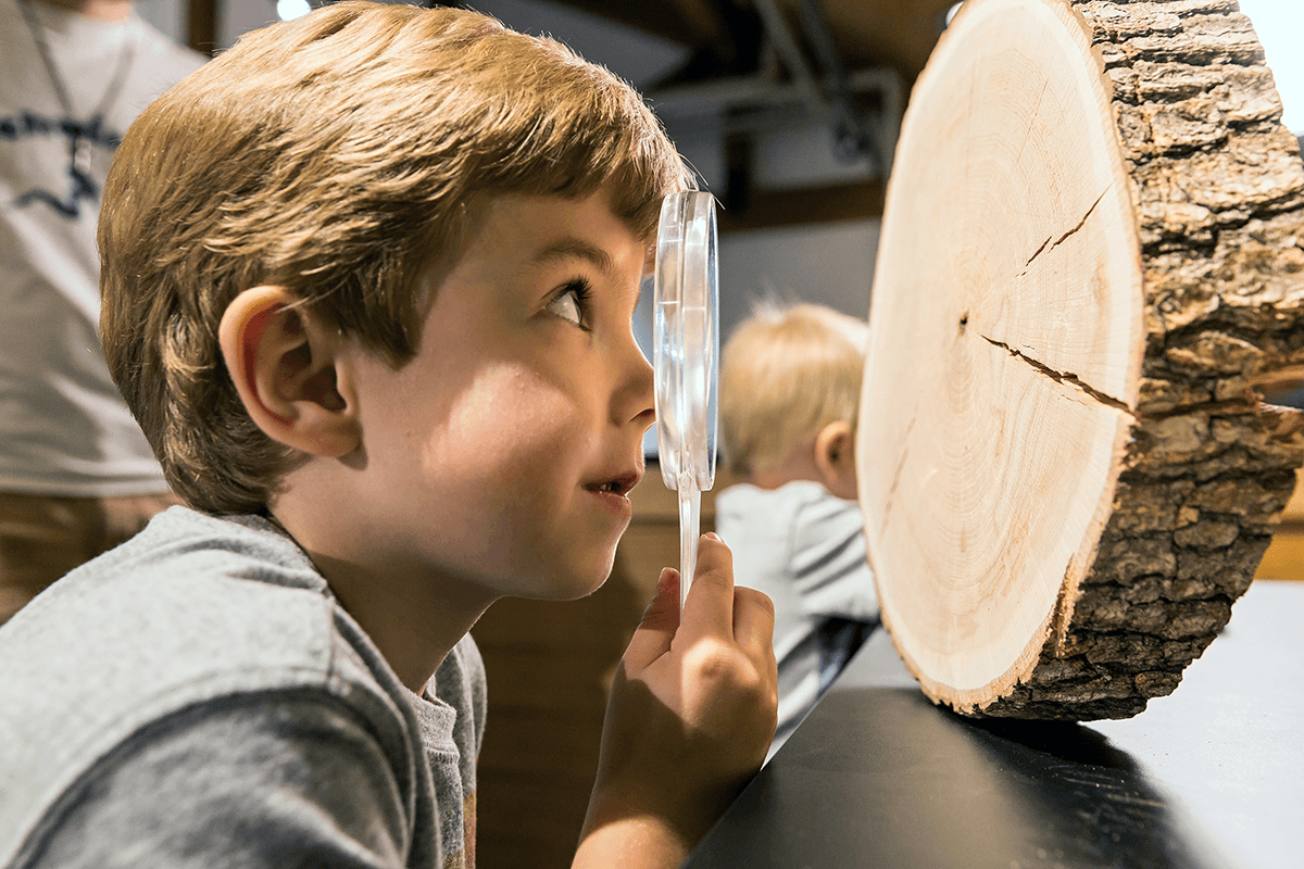 Image of boy looking a slice of a tree with a magnifying glass at Montshire Museum of Science