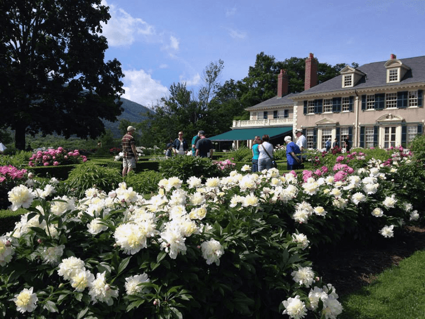Image of peonies at Hildene, The Lincoln Family Home