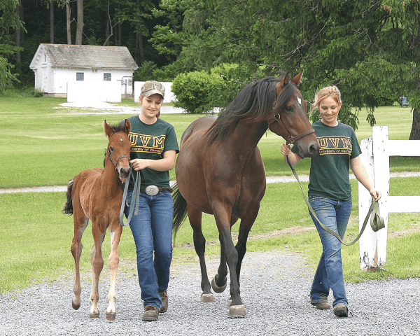 Image of students, mare, and foal at UVM Morgan Horse Farm
