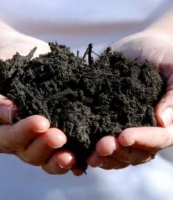 Gratis VTV Blijdorp compost
