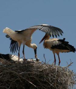 De vogeltrek