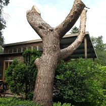 Tuin 67 – Een bijzonder huisje