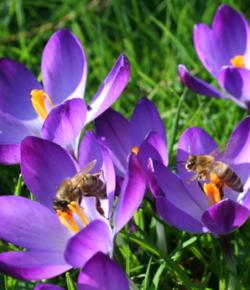 Voorjaar met hommels, bijen en vlinders