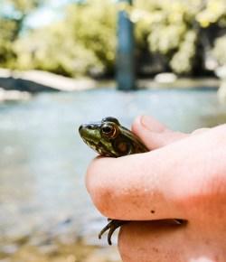 Amfibieën: tips