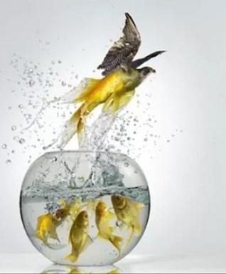 Liberarse de Traumas del Pasado - Terapia de Regresiones - www.vueloalalibertad.com