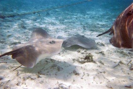 Imagen: Peces Raya en Bora Bora porMarty B, (CC BY-SA 2.0)