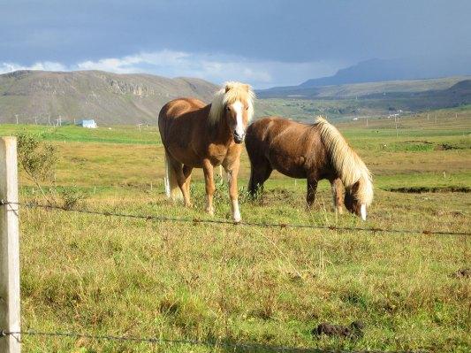 galeria2-Reykjavik9.jpg Imagen: Íslenski hesturinn porngunn Nielsen, (CC BY-ND 2.0)