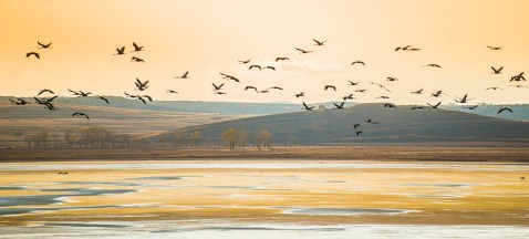 Grullas migrando en Gallocanta Foto: ©depositphotos/AnibalTrejo