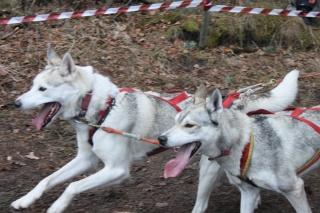 Jämillä 25.5.2013 mukana Hannes Lohen koirien geenitutkimusryhmä!