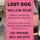 lost dog apple valley