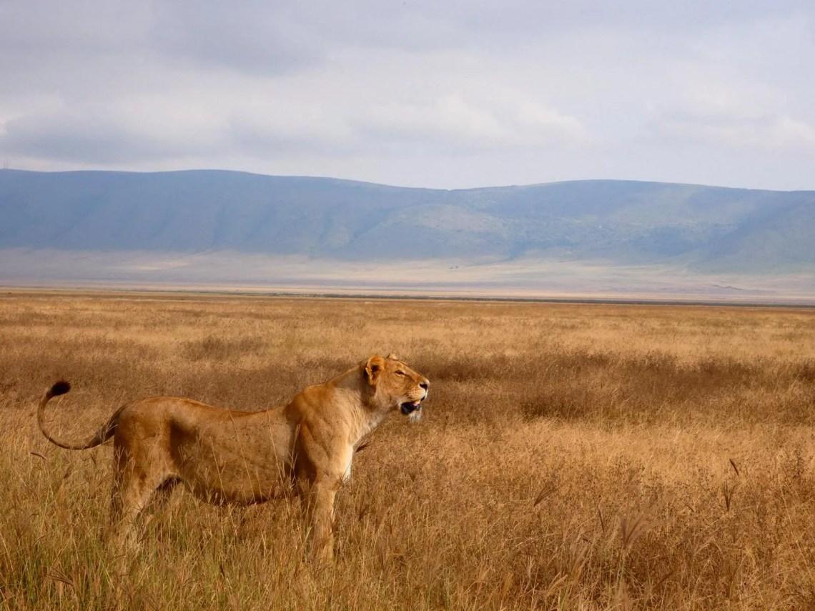 safari tanzania afrika