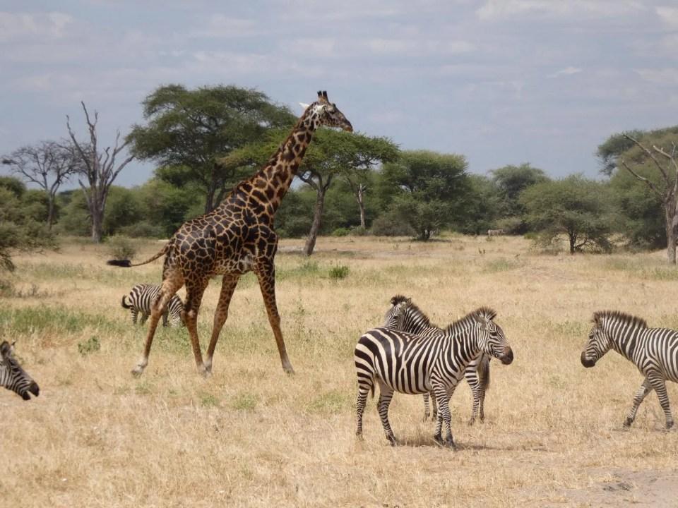 wilde dieren safari