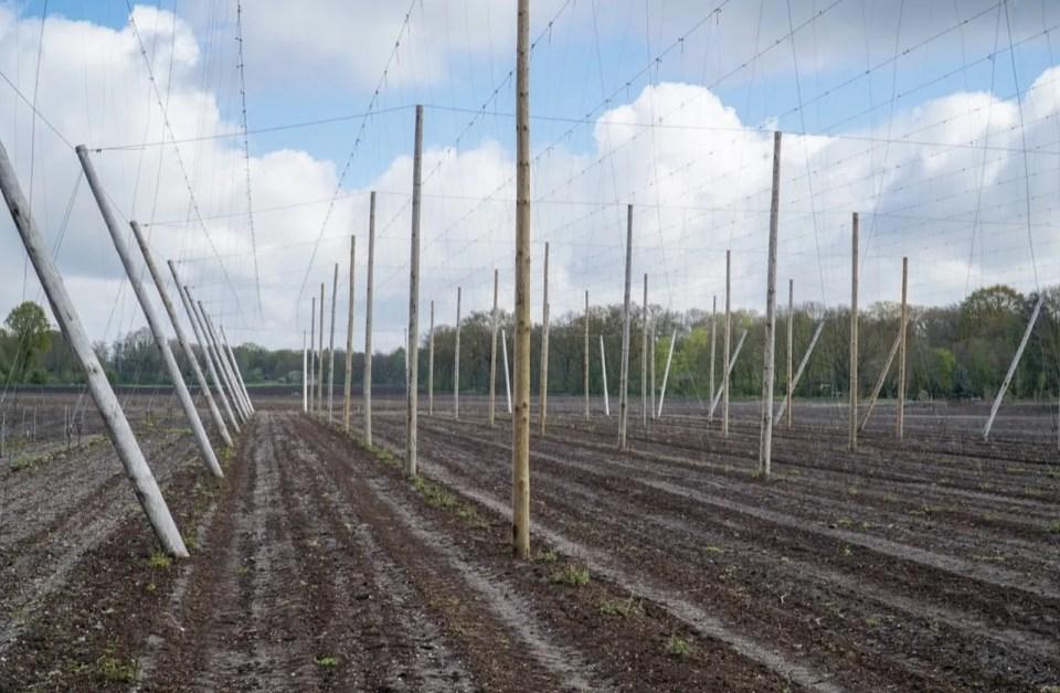 Brabant Hop land van Cuijk