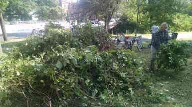 And the pile of removed vegetation grows larger.