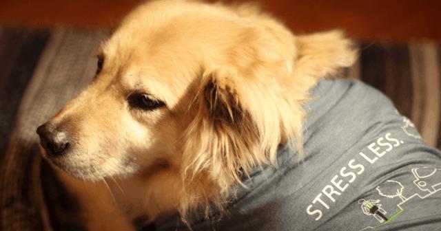 Dog in tshirt