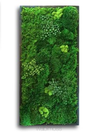 "58x58"" Real Preserved Moss Wall Art Green Wall Collage No ..."