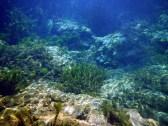 wacissa_underwater-2015--02