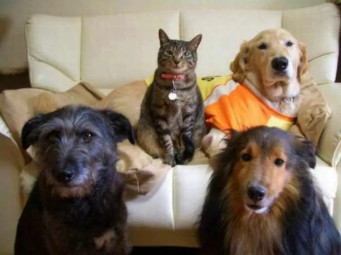Dogs And Cats Looks Very Funny 15 Photos