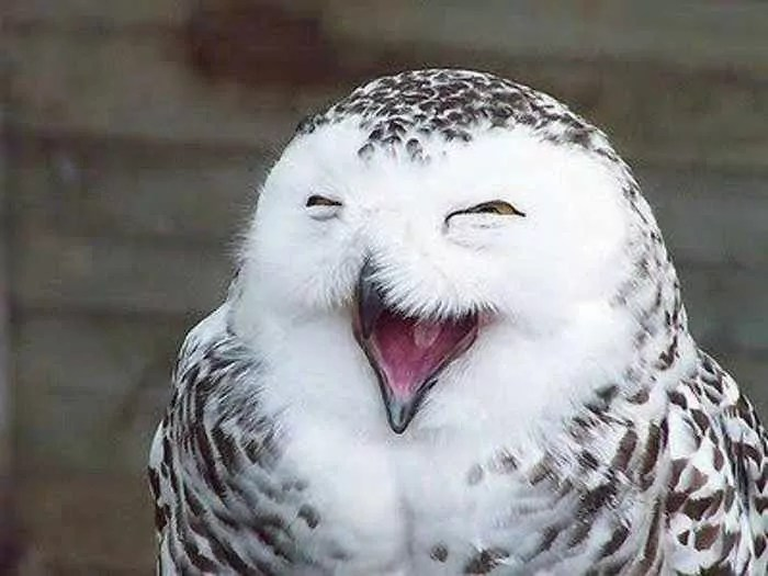 12 Funny Laughing Animals That Will Amaze You -01