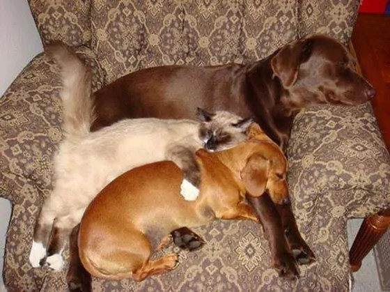 Top 10 Funny And Weird Images of Cat And Dog Love Each Other -02