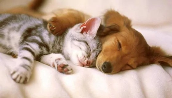 Top 10 Funny And Weird Images of Cat And Dog Love Each Other -03