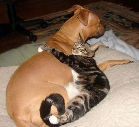 Rare Funny Image Of Cat Hugging Dog Will Blow Your Mind
