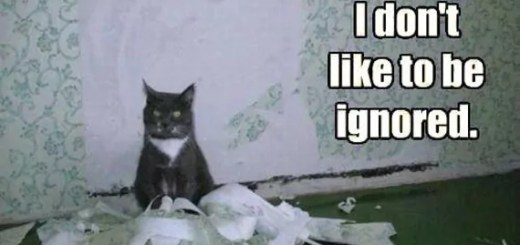 funny-cat-in-engry-mood