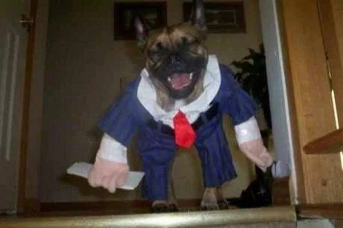10 Hilarious Dogs in Funny Costumes That Will Blow Your Mind -05