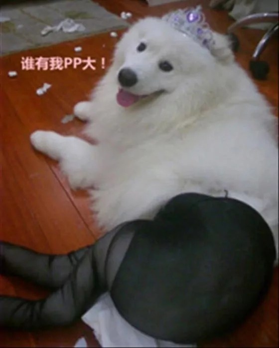 Top 15 Funny Dogs In Weird Costume That Will Make You Laugh -11
