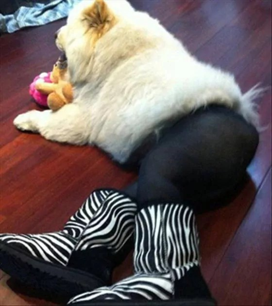 Top 15 Funny Dogs In Weird Costume That Will Make You Laugh -13