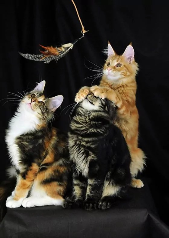 Cat's Family Photo Shoot Fails Is Hilarious