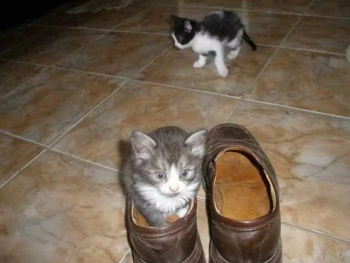 8 Awesome Funny Pictures of Cute Kittens -03