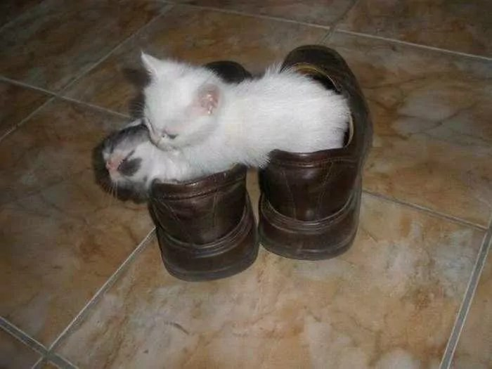 8 Awesome Funny Pictures of Cute Kittens -06