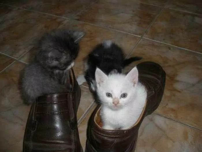 8 Awesome Funny Pictures of Cute Kittens -08