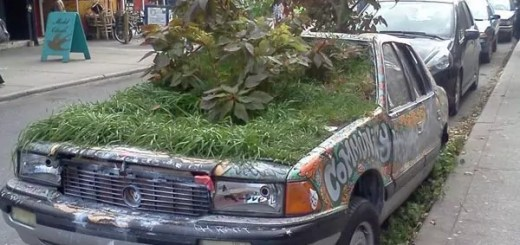 funny-picture-car-garden