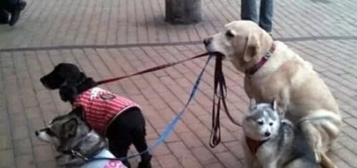 funny-picture-dog-nanny