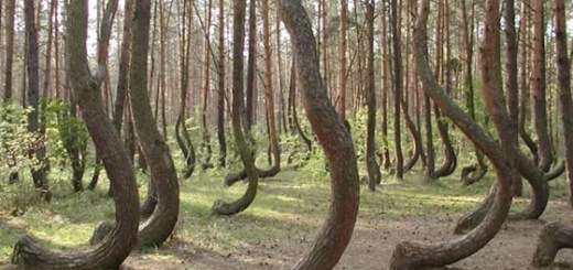 funny-weird-tree-forest