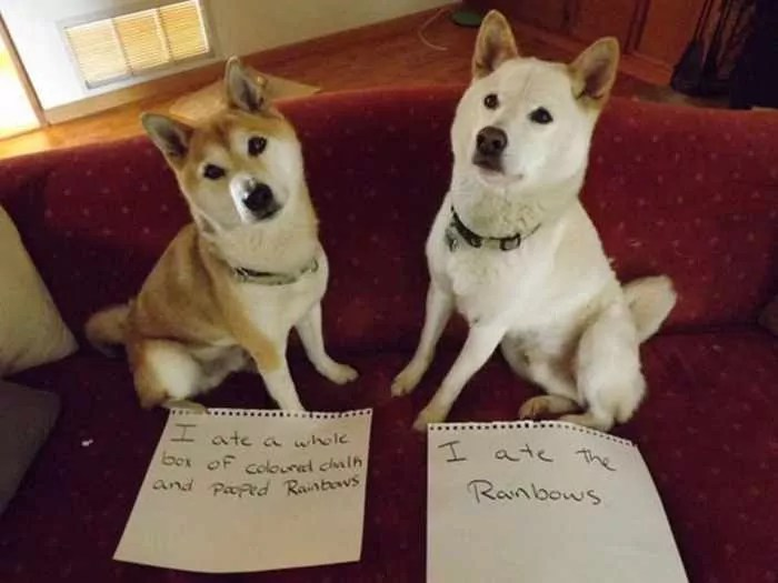 55 Hilarious Examples Of Dog Shaming At Its Best -03