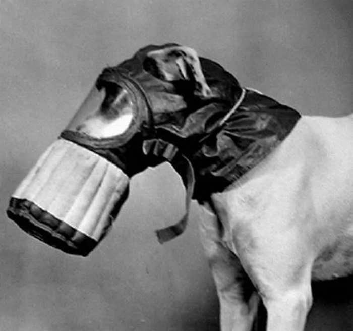 19 Funny Pictures of Respirator For Dogs -11
