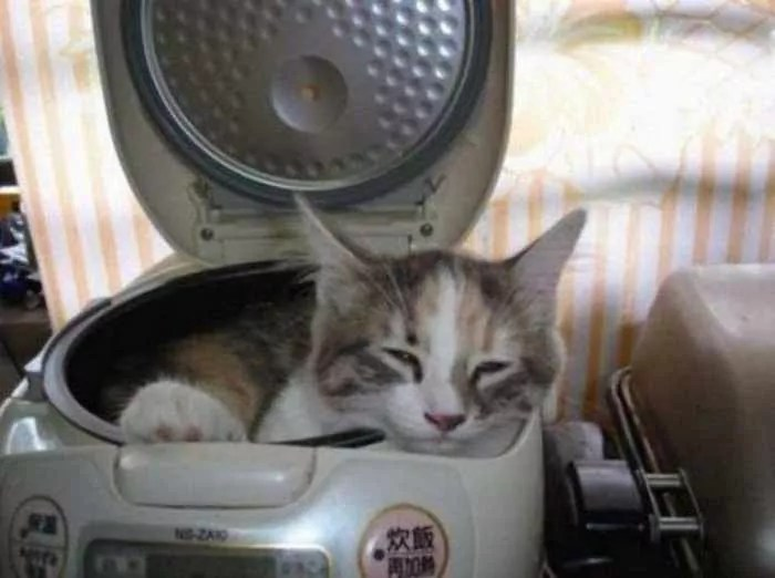 20 Awesome Funny Sleeping Cats -10