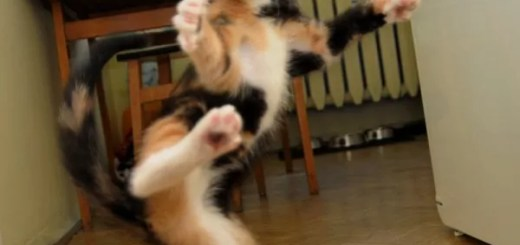 the-karate-cat