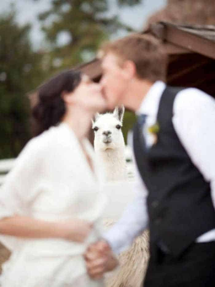 42 Hilarious Pictures of Unexpected Wedding Photobombs Will Make You LOL -01