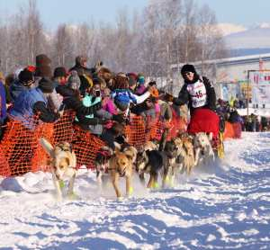 Musher at the Iditarod start in Willow Alaska
