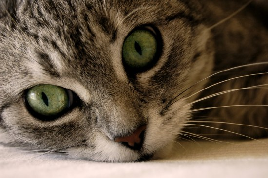 Photo of cat with pet insurance story